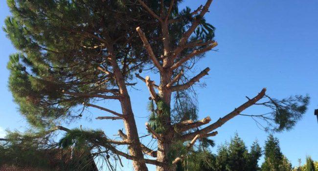 Bäume Fällen Mannheim, Ludwigshafen & Umgebung